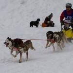 Hundeschlittengespann