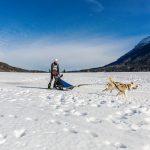 Schlittenhunderennen in Inzell, Musher mit der Nr. 155