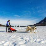 Schlittenhunderennen in Inzell, Musher mit der Nr. 156